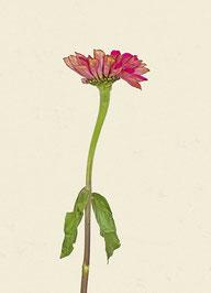 Blume (#13), Pigmentdruck auf Hahnemühle Photo Rag 308 g/m²