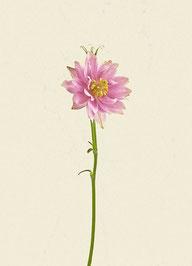 Blume (#45), Pigmentdruck auf Hahnemühle Photo Rag 308 g/m²
