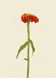 Blume (#11), Pigmentdruck auf Hahnemühle Photo Rag 308 g/m²