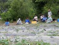 県有地 サツマイモ苗植え