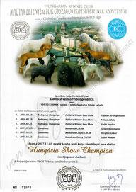 Ungarischer Show Champion