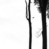 photography Forêt de Soignes photo