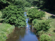 今週の1景 (8月19日~25日)           夏が旬の冬瓜と竹林(2014年8月20日武蔵野市内にて):熟すと皮がかたくなり冬まで貯蔵できるので、夏野菜でも冬の瓜と呼ばれたようです