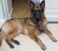 Happy-Go-Lucky Dog - Consultation comportementale