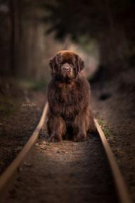 Puppy (kennel Corner Brook)