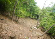 天然林画像