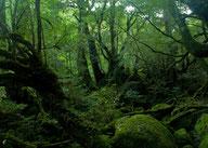 原生林画像