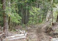人工林の画像