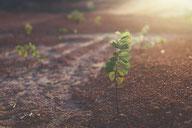 土壌動物学