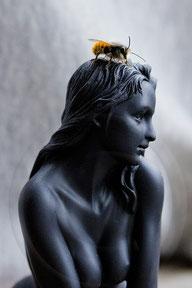 Gehörnte Mauerbien auf Skulptur