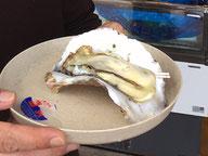 大きな生岩牡蠣