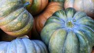 かぼちゃ 9月~11月