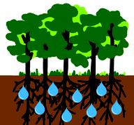 緑のダム機能の画像