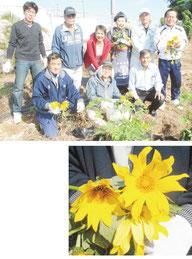 ニトベギク(下)を植栽した石垣・岩手交流協会のメンバー=10日午後、宮良