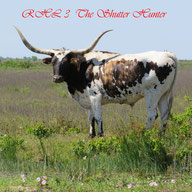 Longhorn by the ranch