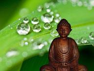 Buddha, Meditation , Blatt mit Wassertropfen, Stress und Entspannung, EMDR, Trauma-Therapie, PTBS, Rosacea, Neurodermitis, Psoriasis, Psychotherapie
