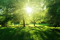 Symbolbild mit einem Wald