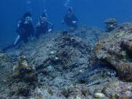 石垣島のウミカメと遭遇