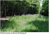 Waldschneise im Revier Grünberg 2