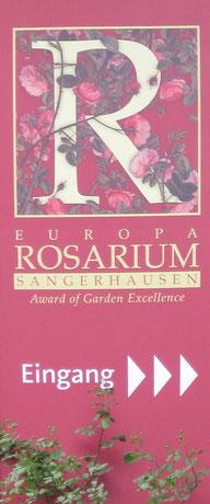 Rosen Hexenrosengarten Rosenblog