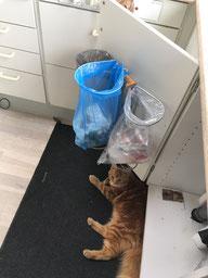 Affalsstativ/ affaldsstativer til sortering i et køkken her på et køkkenlåge på 45,5cm. Affaldssorteringssystem til ethert køkken!