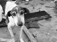 Massacre des chiens en Irak