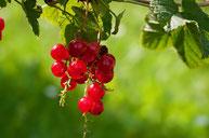 Beeren machen schön - fair4world