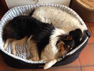 Hundepsychologie, Beratung und Coaching