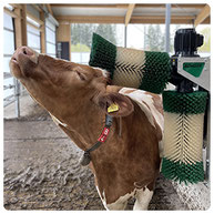 Schurr Kuhbürste Viehputzmaschine 2-Bürstensystem Viehputzgerät Kuhputzmaschine