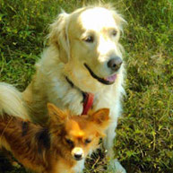 Benny & klein Sammy