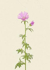 Blume (#29), Pigmentdruck auf Hahnemühle Photo Rag 308 g/m²