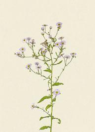 Pflanze (#37), Pigmentdruck auf Hahnemühle Photo Rag 308 g/m²
