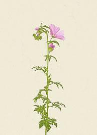 Blume (#30), Pigmentdruck auf Hahnemühle Photo Rag 308 g/m²