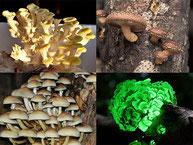 Pilzarten im Überblick