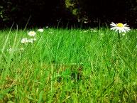 printemps jimdo