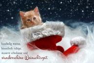 Katzenweihnachten