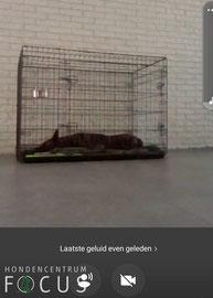 Jouw hond vanaf elke plek in de gaten houden met een DogCam.