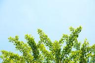 空とグリーン