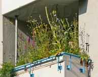 Naturgartenbalkon Balkon Balkonkasten wildstauden