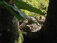 Waldbaden im Schönbuch