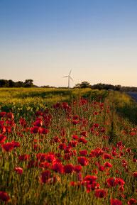 Windkraftanlage auf Samsø. Copyright: Jeanette Philipsen/VisitSamso