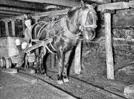 Cheval tractant un chariot dans une mine