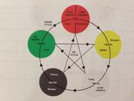 ▲五行の関係:木は緑、土は黄色