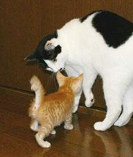 初めて子猫を見ておどろく「ク」