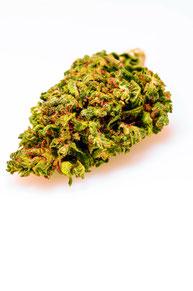 B2B CBD Wholesale  Hemp Hanf Blüten Super Lemon Haze Indoor Buds Flowers Cannabis Sativa Foto