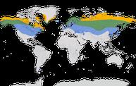 Karte zur Verbreitung des Birkenzeisig weltweit.