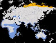 Karte zur Verbreitung des Sichelstrandläufers (Calidris ferruginea)