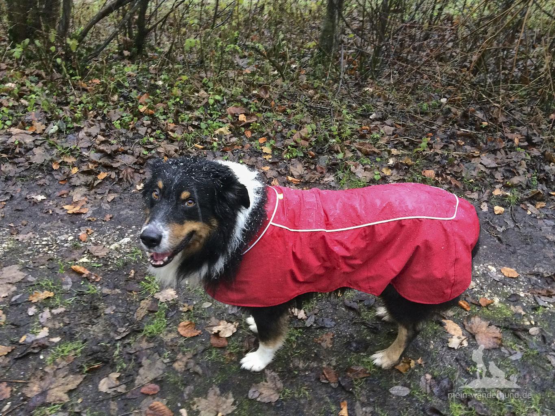 HärtetestRegenjacke Den Hund Im Und Dauer Für Wander dhtsQrCxB
