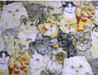 Nr.25 Katzenköpfe groß