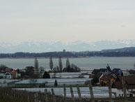 Wanderung auf der Reichenau: Blick auf die Alpen
